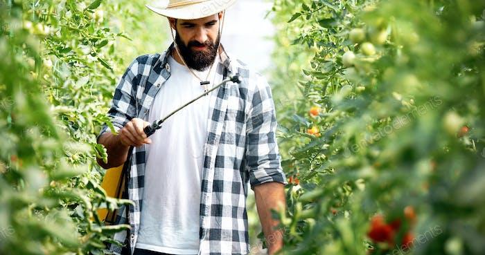 Junger Landwirt schützt seine Pflanzen mit Chemikalien