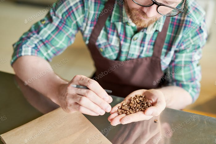 Coffee Manufacturer Examining Beans