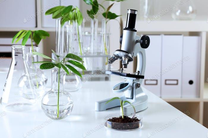 Grüne Pflanzen im Biologielabor