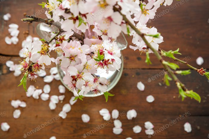 Almond blossoms on blur background, closeup view