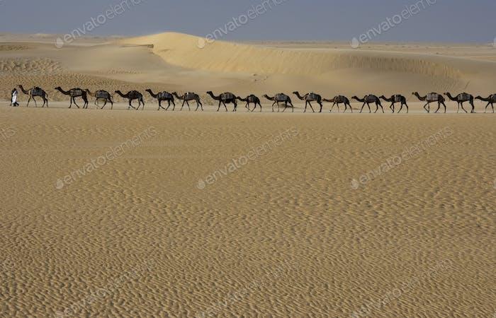 Kamelzug, Mali