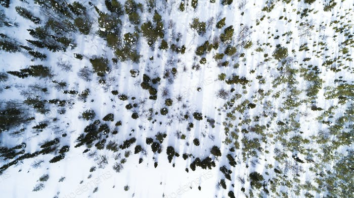 Aerial drone view of idyllic winter landscape. Evergreen snow covered forest from the top, sun rise.