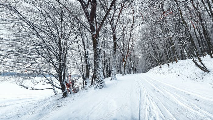Silence on a winter road in the forest