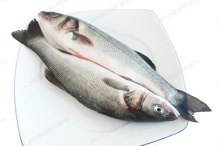two sea bass