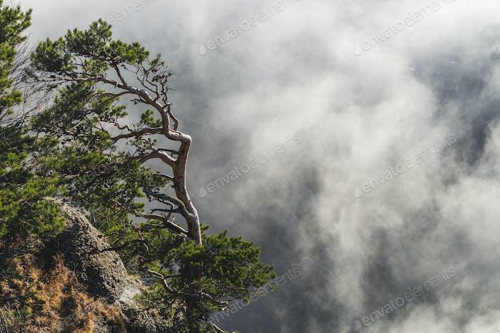 Nadelbaum am Rande einer Klippe in den Bergen