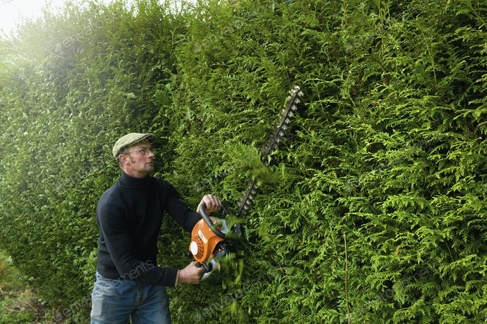 A man trimming a tall hedge with a motorized hedge trimmer.