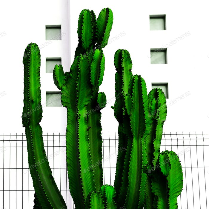 Tropical Urban minimal art. Cactus and white location