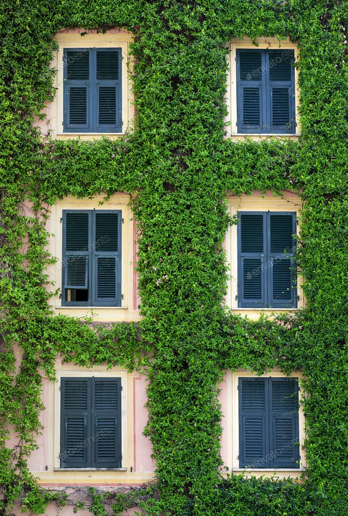 Front facade of a building covered in a creeper
