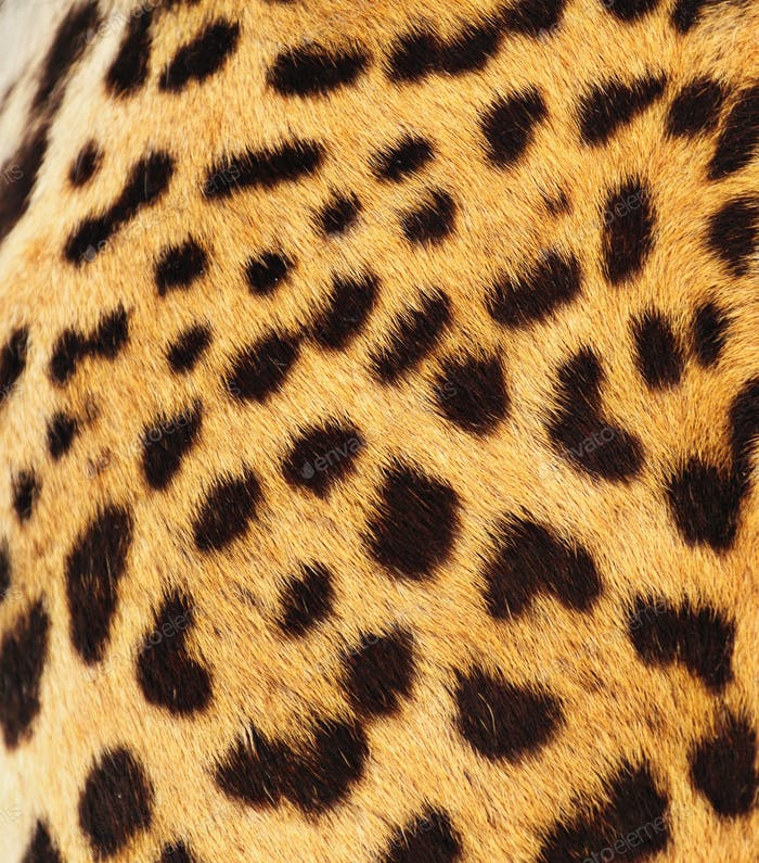 Echte Leoparden-Skin