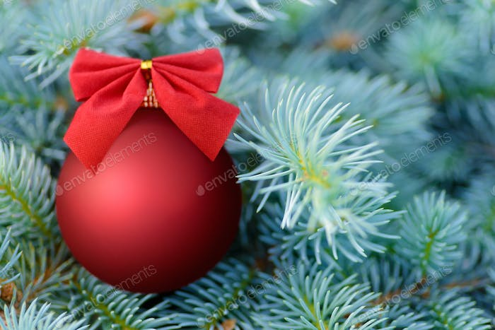 Red Christmas bauble on a fir tree