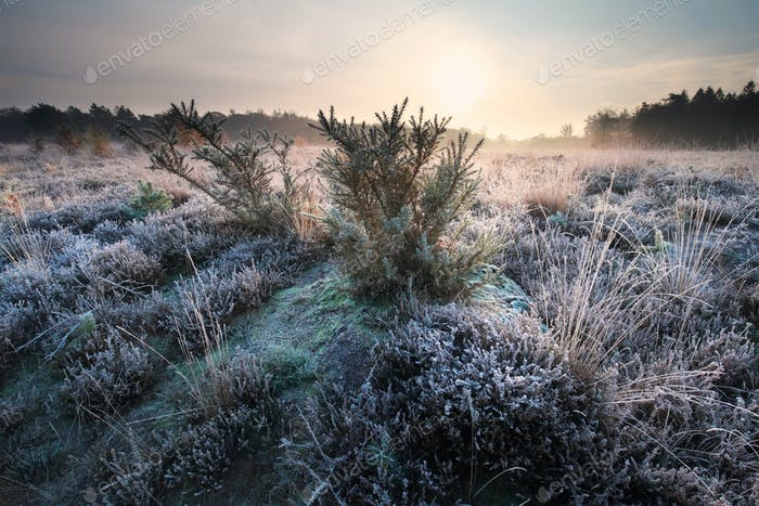 sunrise over meadow covered with frost