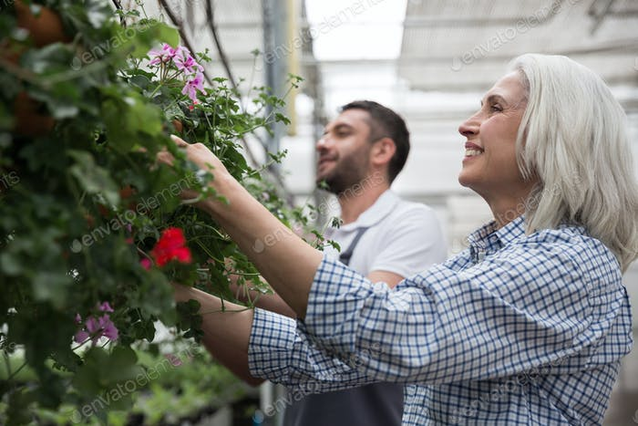 Mature happy woman standing in greenhouse near young bearded man