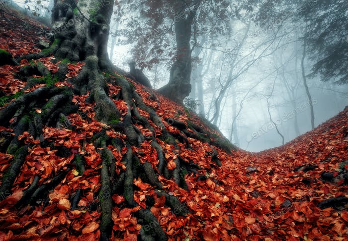 Mysterious Dark Autumn Forest In Blue Fog With Red Leaves Trees