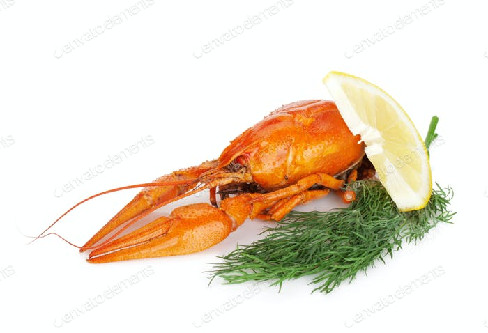 Boiled crayfish with lemon slice and dill