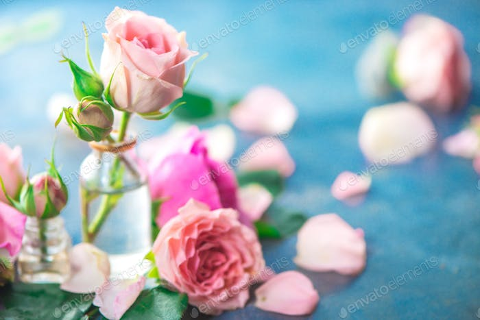 Pink peony roses, petals, and leaves on a wet rainy background in the morning light. Spring header