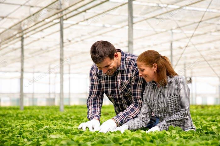 Zwei Agronom Ingenieur kontrolliert die Qualität der Salatplantage