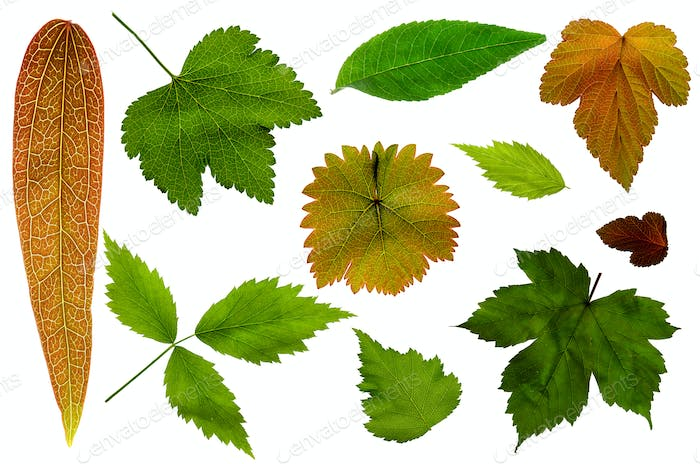 Lots of Leafs on a White Background