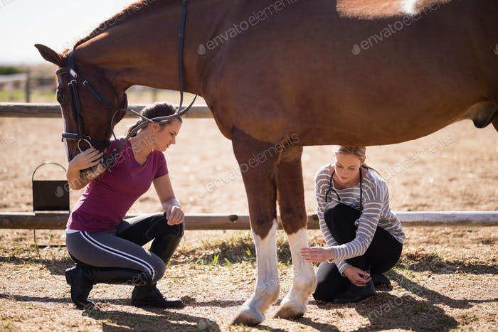 Female vet with woman looking at horse leg