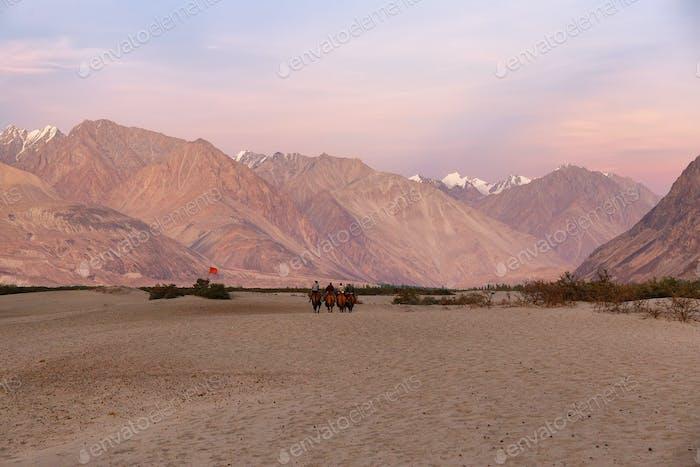 Hunder Sanddünen in Nubra Valley, Ladakh, Indien.