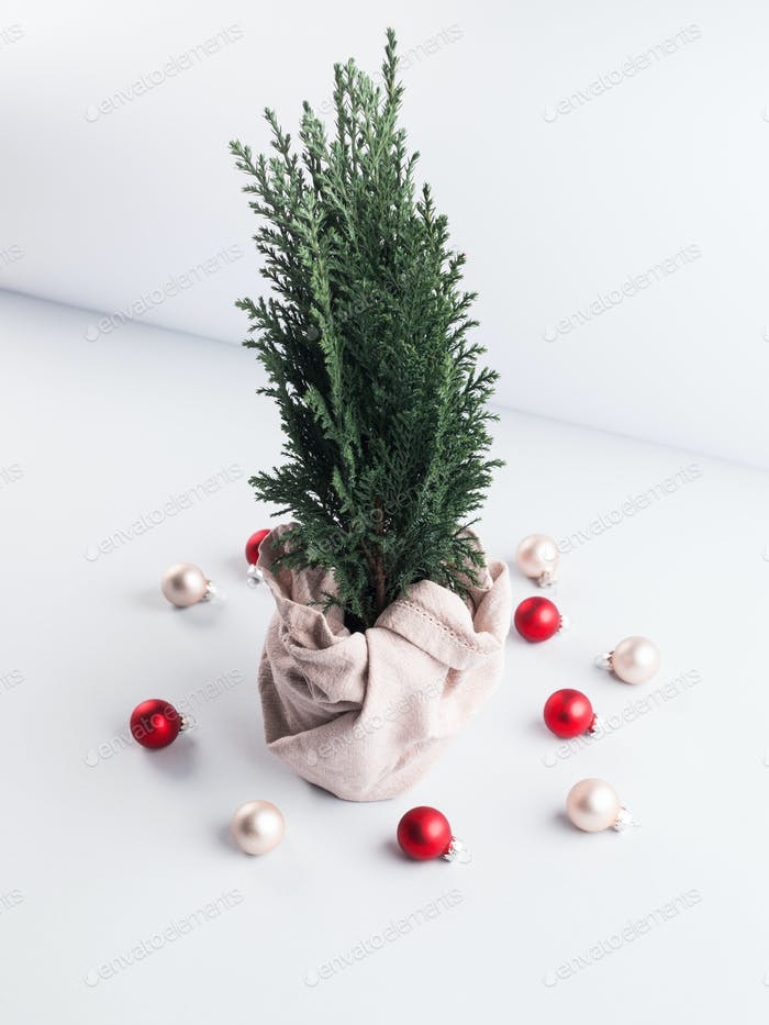 Christmas tree plant as gift wrapped in textile