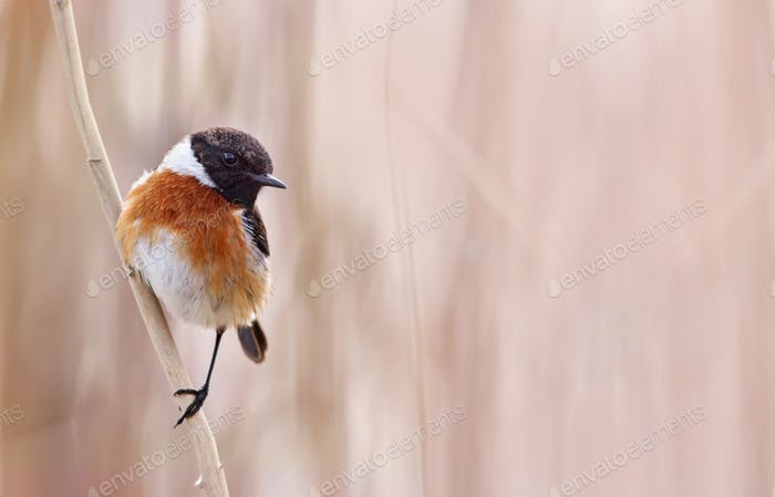Small bird sitting on a reed
