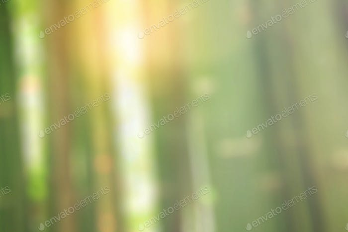 Bamboo with blurred images