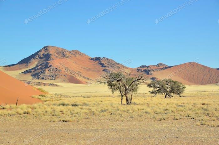 Grass, dune and mountain landscape near Sossusvlei