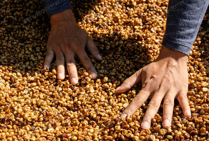Coffee growers are selecting coffee beans that are exposed to th