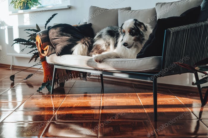 Domestic animal and human's friend sits on sofa and poses on camera