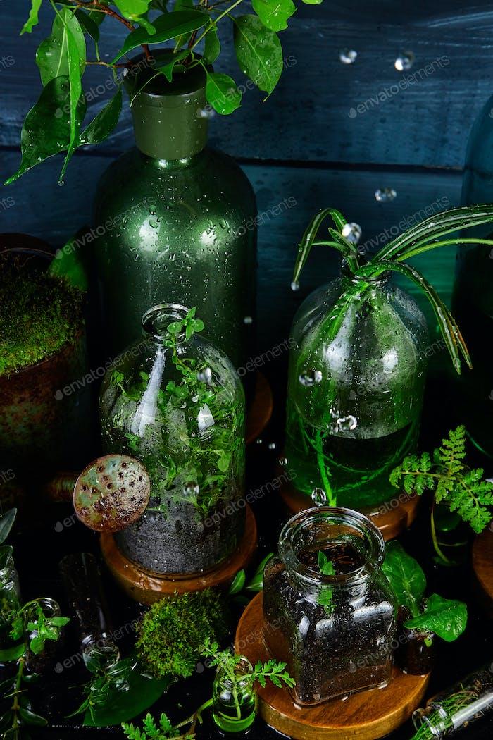 Mini-Glasvasen und Flasche mit grünen Blättern, Pflanzen. Gartenarbeit