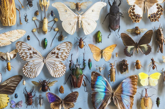 Close up of a selection of colourful butterflies and beetles in a display case at a museum.
