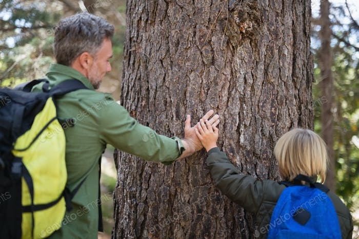 Father and son touching tree trunk in forest