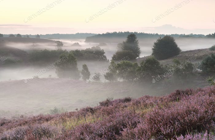 calm summer morning on pink hills