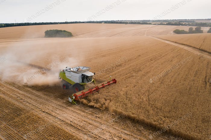 Aerial top view of combine harvester working on wheat field
