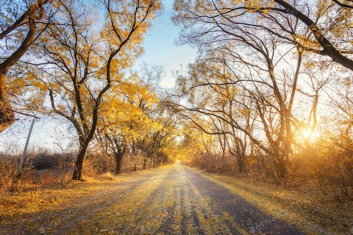 Herbstwald. Wald mit Landstraße bei Sonnenuntergang