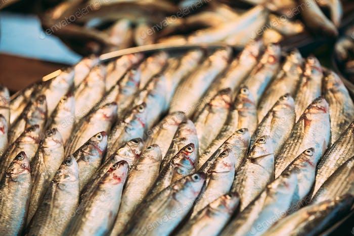 Frischer Sprotte Fisch auf dem Display auf Eis im Market Store Shop. Meeresfrüchte-Fisch-Hintergrund