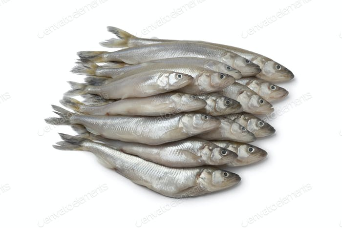 Fresh European smelt fishes