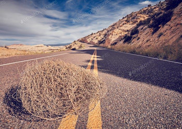 Tumbleweed on a road.