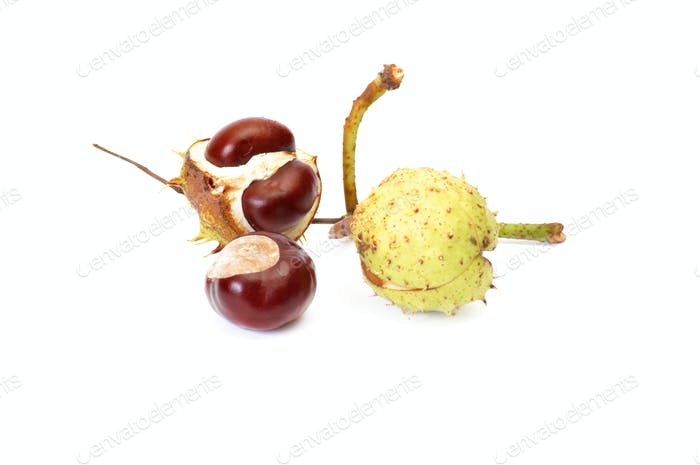 Fun ripe chestnuts on a white.