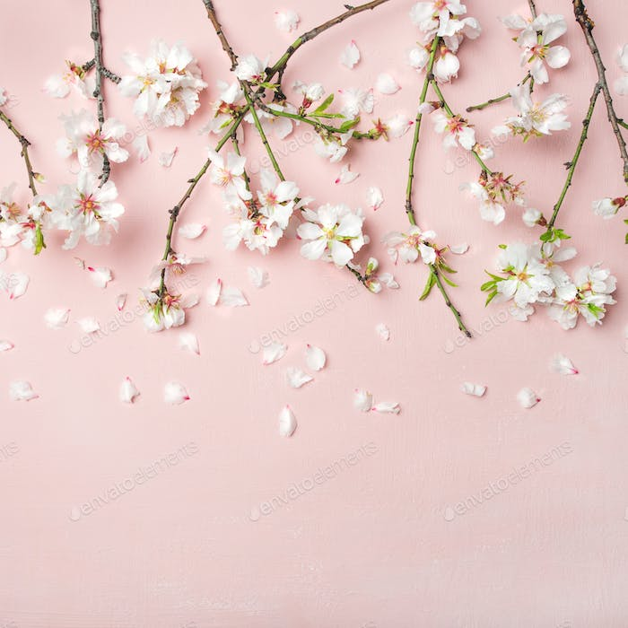 Spring almond blossom flowers over light pink background, square crop