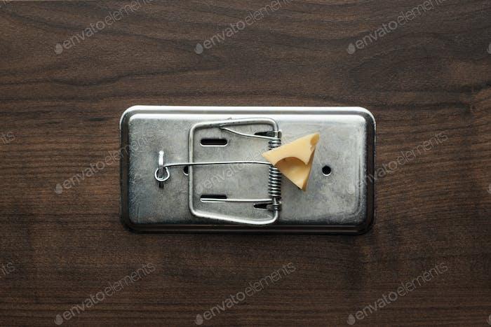 Stück Käse In Mausefalle