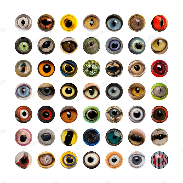 Composition of Animal eyes, isolated
