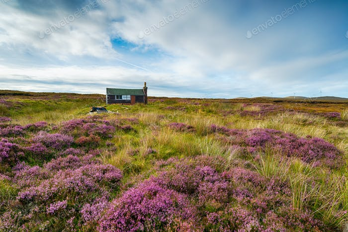 A Scottish shieling hut on peat bog near Stornoway