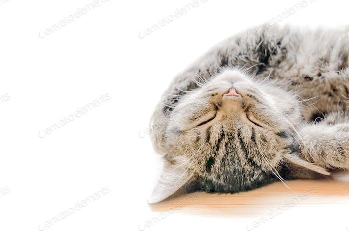 Lovely sleeping cat