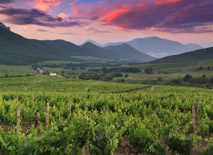 Beautiful vineyard in mountain valley at sunset