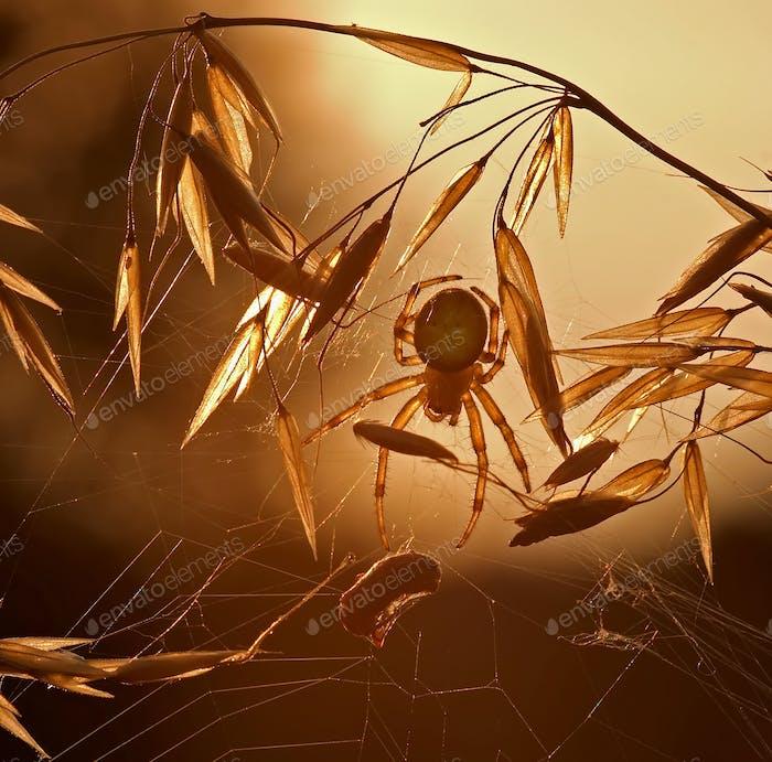 Huntig spider