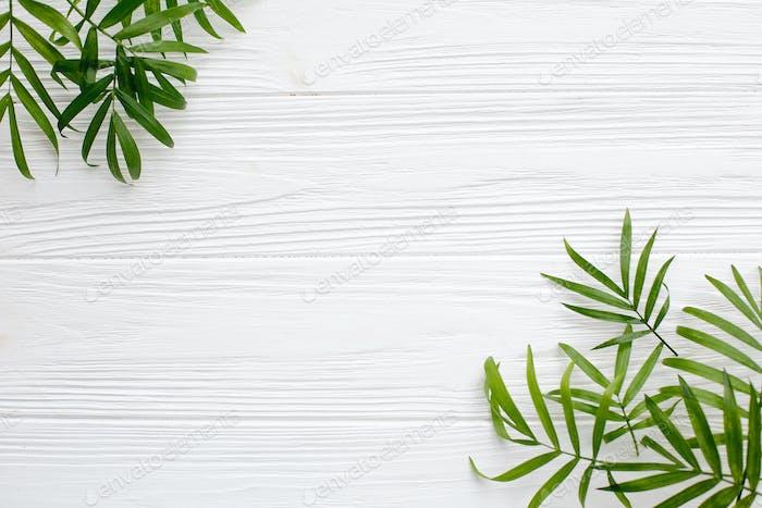 Fresh palm leaves border on white wooden background