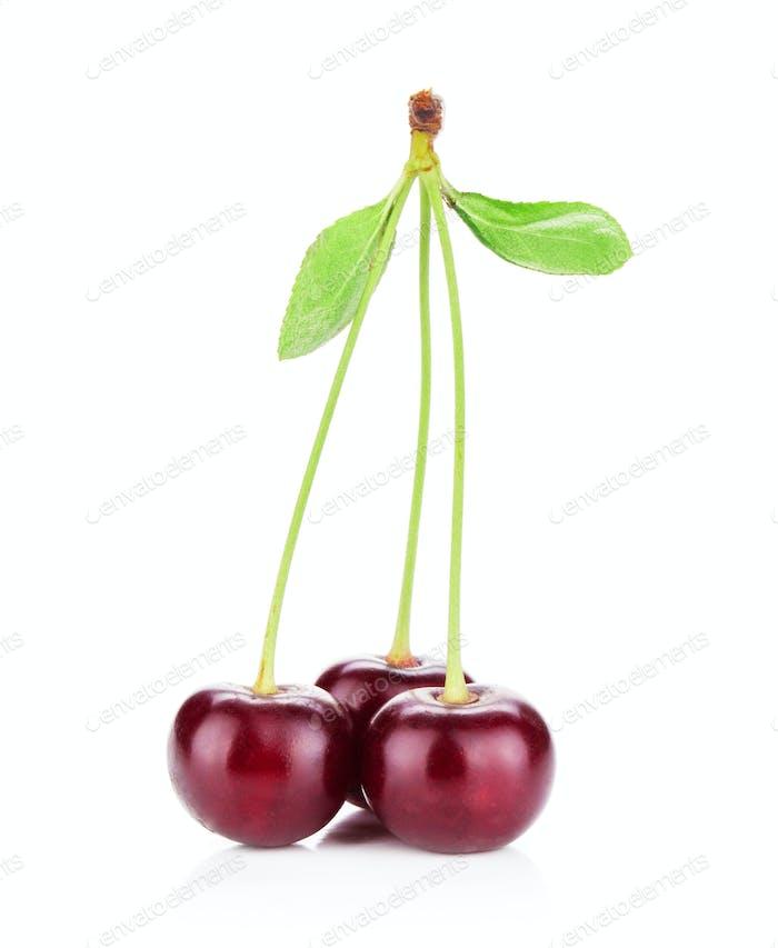 Three ripe cherries