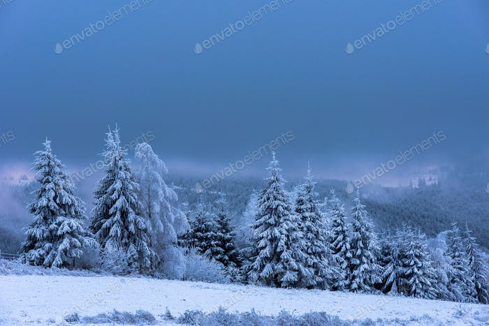 Winter landscape with snow covered fir trees