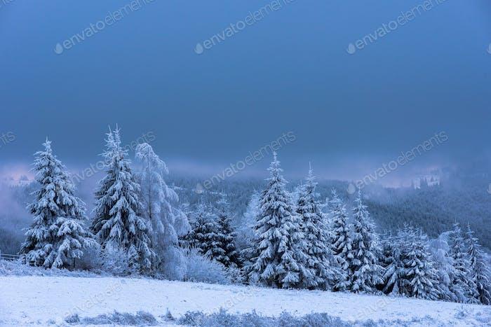 Winterlandschaft mit schneebedeckten Tannenbäumen